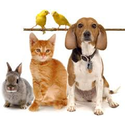 PetSupplies.com Home & Garden Recreation & Leisure Pets Coupons 2016 and Promo Codes