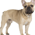 French Bull Coupons 2016 and Promo Codes