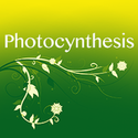 Photocynthesis Photography Coupons 2016 and Promo Codes